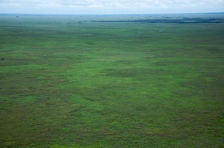 Amazonian lowlands