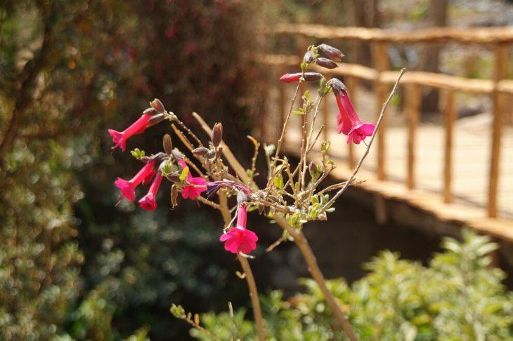 Blume im Urwald