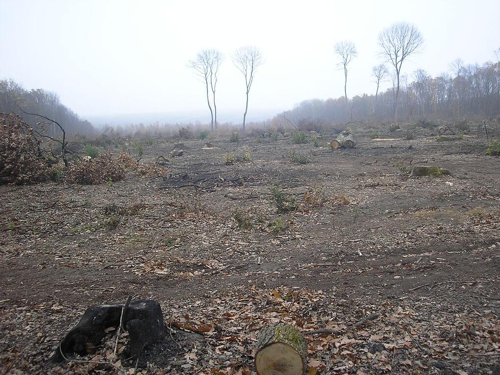 Deforestation in the Carpathian Mountains