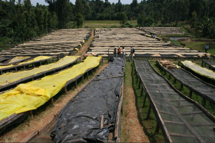 Drying racks of the Baragwa Coffee Cooperation in Central. Largest customer