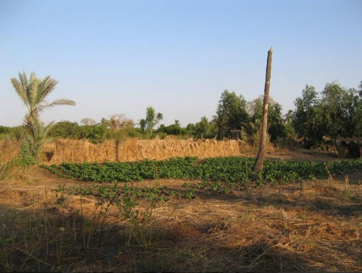Field of a small farmer near Mboro