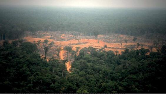 Forest clearance in the DR Congo