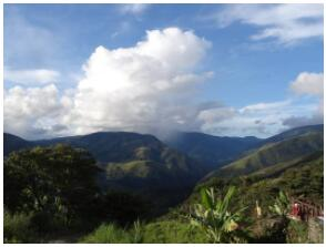 In the Yungas on the eastern slopes of the Andes