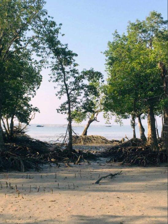Mangroves supply themselves with oxygen