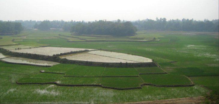 Planting the seedlings in spring is part of growing rice