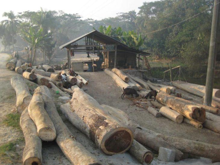 Sawmill in Barisal
