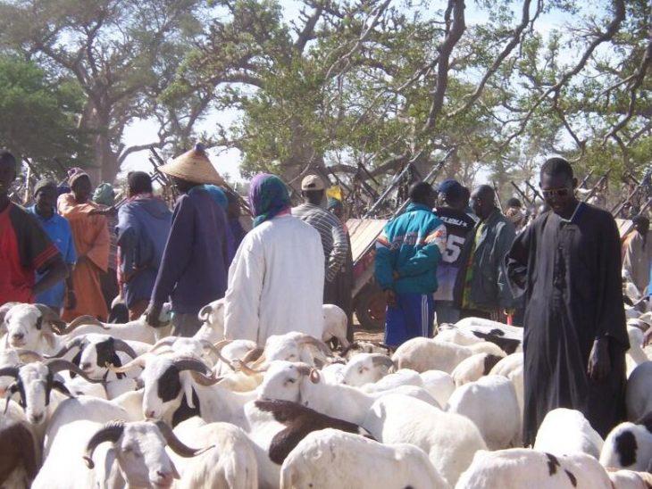 Sheep at the weekly market