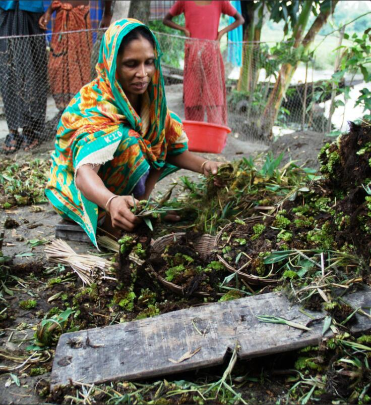 The farmer sorts and processes water hyacinths to create a floating bed.