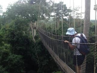 The spectacular suspension bridge in the Kakum National Park