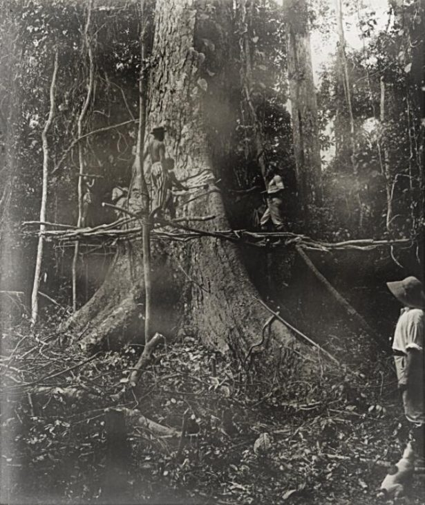 Timber industry around 1890