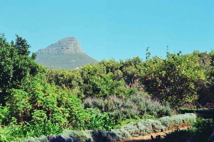 Vegetation around Cape Town