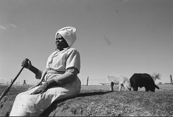 Woman in the Chris Hani District, Eastern Cape, herding pigs