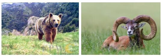 Armenia Animals
